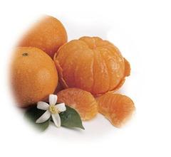 Honey-Tangerine 2